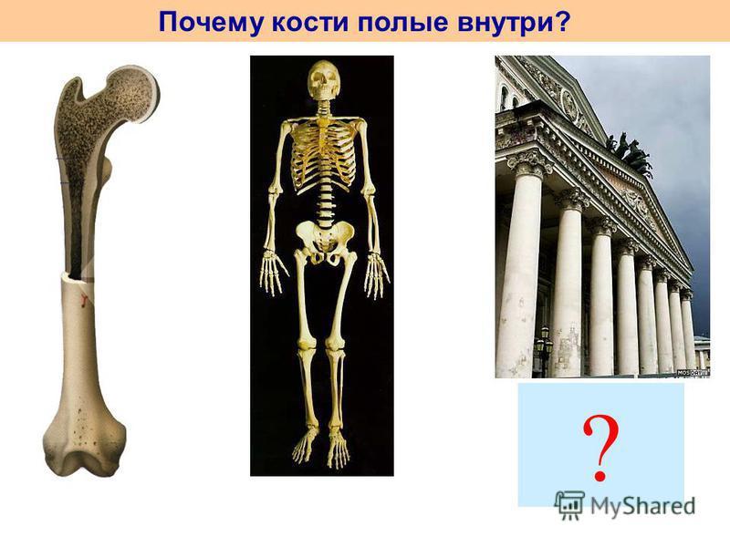 Почему кости полые внутри? ?