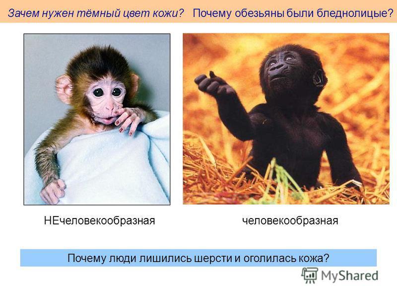 Зачем нужен тёмный цвет кожи? Почему обезьяны были бледнолицые? человекообразная НЕчеловекообразная Почему люди лишились шерсти и оголилась кожа?