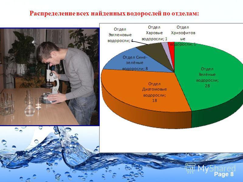 Page 8 Распределение всех найденных водорослей по отделам: