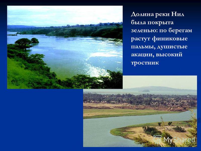 Долина реки Нил была покрыта зеленью: по берегам растут финиковые пальмы, душистые акации, высокий тростник