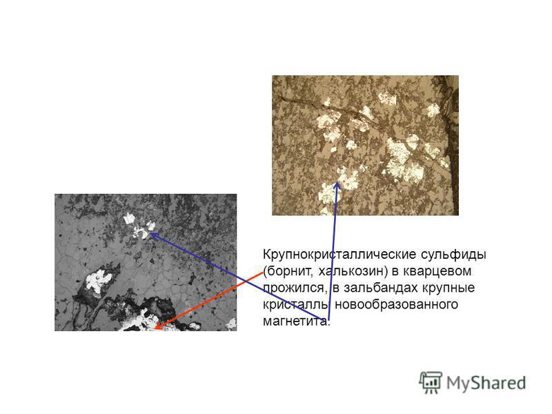 Крупнокристаллические сульфиды (борнит, халькозин) в кварцевом прожился, в зальбандах крупные кристаллы новообразованного магнетита.