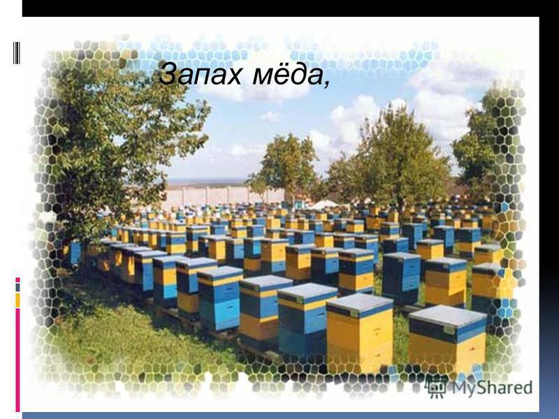 Запах мёда,