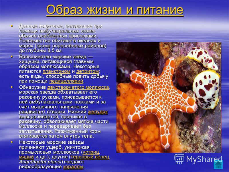 Образ жизни и питание Образ жизни и питание Донные животные, ползающие при помощи амбулакральных ножек, обычно снабженных присосками. Повсеместно обитают в океанах и морях (кроме опреснённых районов) до глубины 8,5 км. Донные животные, ползающие при