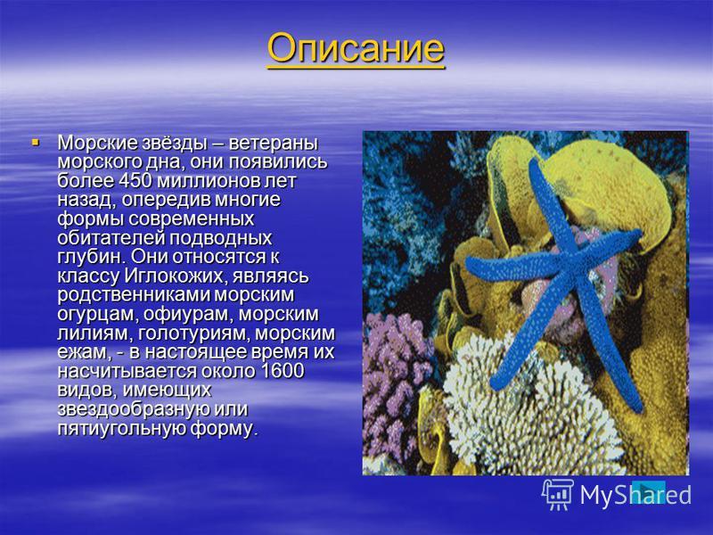 Описание Морские звёзды – ветераны морского дна, они появились более 450 миллионов лет назад, опередив многие формы современных обитателей подводных глубин. Они относятся к классу Иглокожих, являясь родственниками морским огурцам, офиурам, морским ли