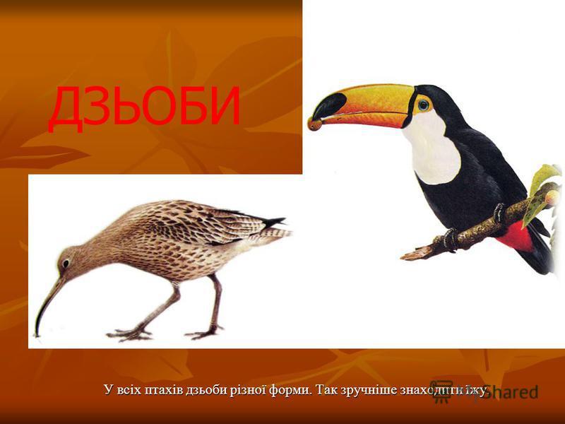 У всіх птахів дзьоби різної форми. Так зручніше знаходити їжу. ДЗЬОБИ