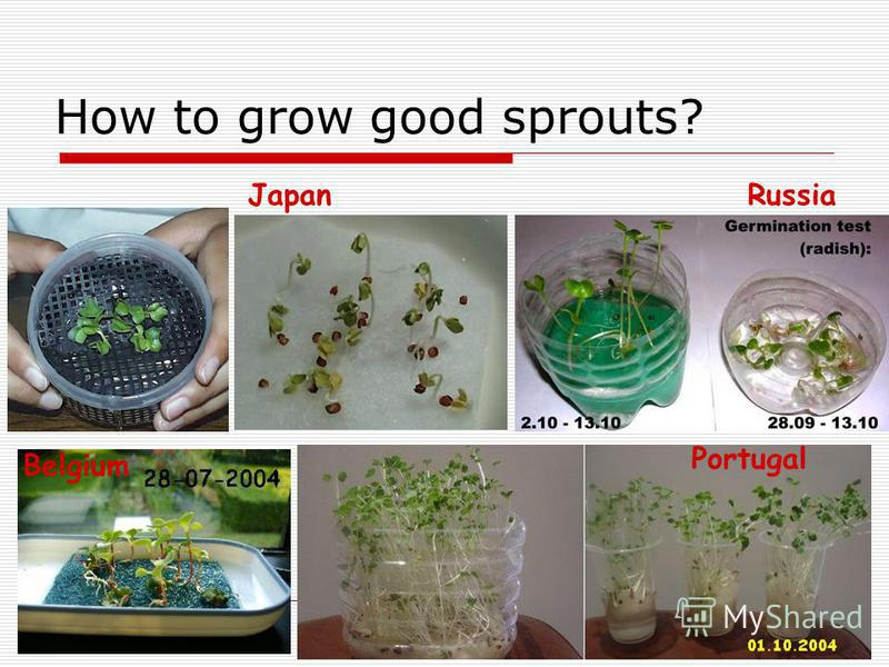How to grow good sprouts? JapanRussia Portugal Belgium