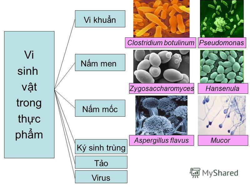 Zygosaccharomyces Hansenula Clostridium botulinum Pseudomonas Aspergillus flavusMucor Vi sinh vt trong thc phm Vi khun Nm men Virus Nm mc Ký sinh trùng To