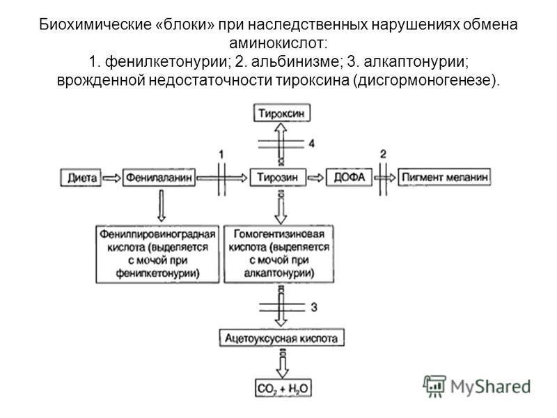 Биохимические «блоки» при наследственных нарушениях обмена аминокислот: 1. фенилкетонурии; 2. альбинизме; 3. алкаптонурии; врожденной недостаточности тироксина (дисгормоногенезе).