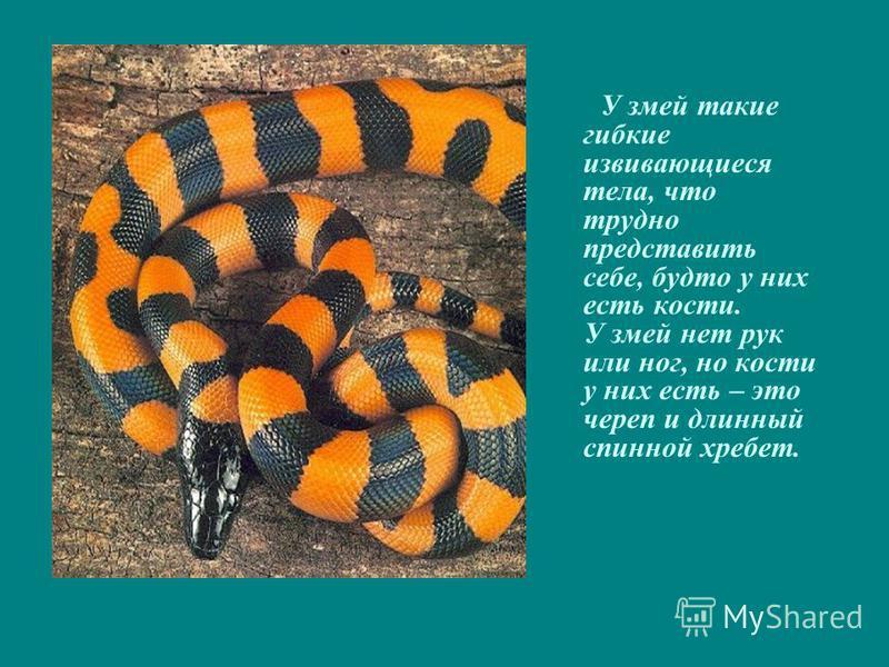У змей такие гибкие извивающиеся тела, что трудно представить себе, будто у них есть кости. У змей нет рук или ног, но кости у них есть – это череп и длинный спинной хребет.