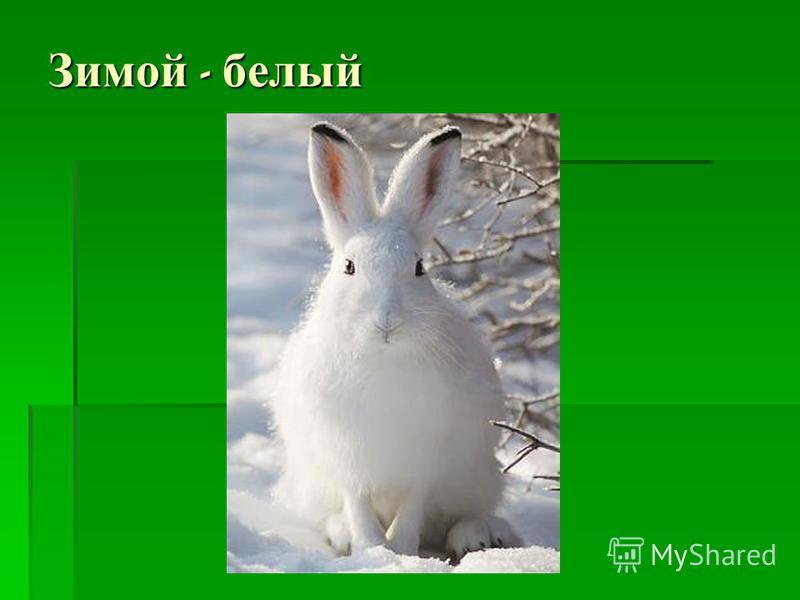Зимой - белый