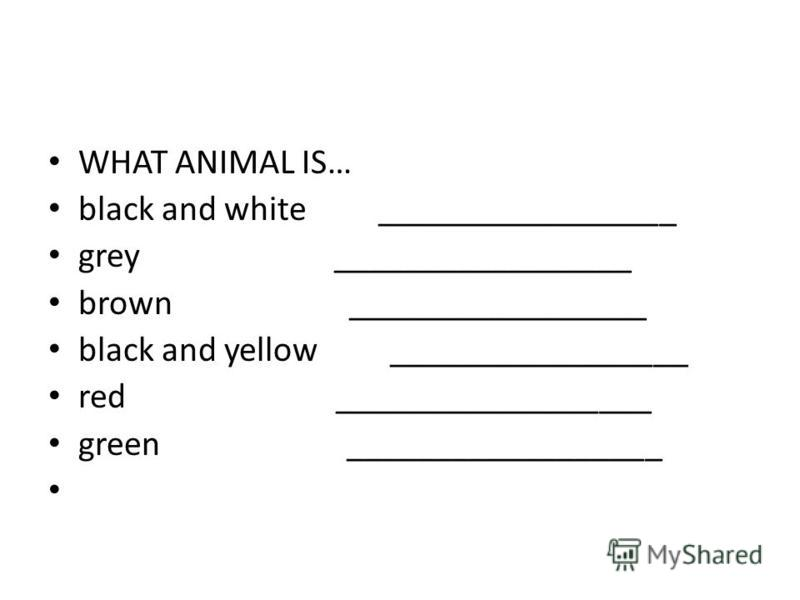 WHAT ANIMAL IS… black and white _________________ grey _________________ brown _________________ black and yellow _________________ red __________________ green __________________