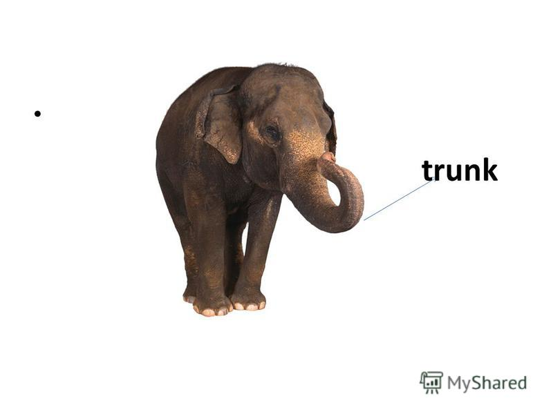 t trunk