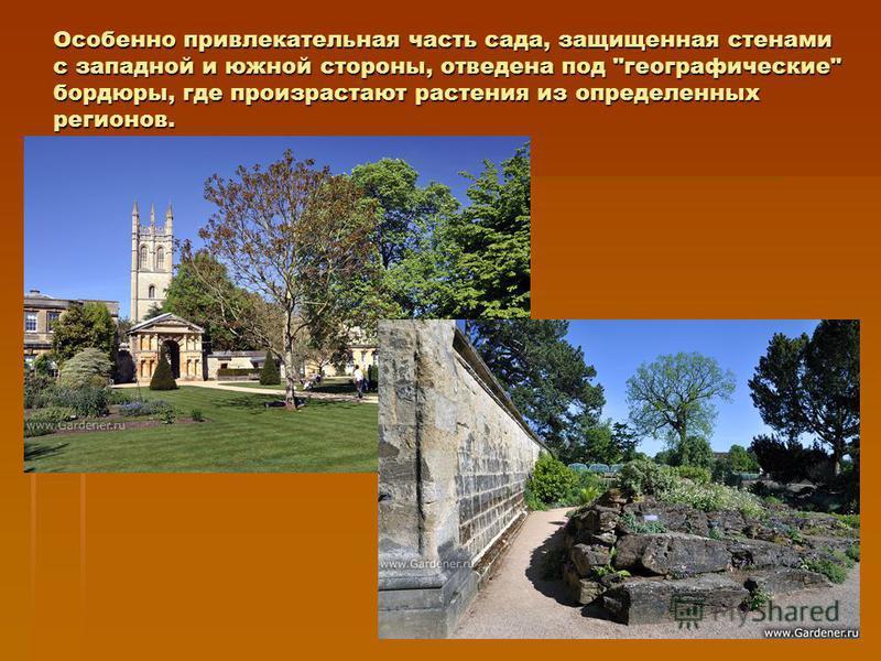 Особенно привлекательная часть сада, защищенная стенами с западной и южной стороны, отведена под географические бордюры, где произрастают растения из определенных регионов.