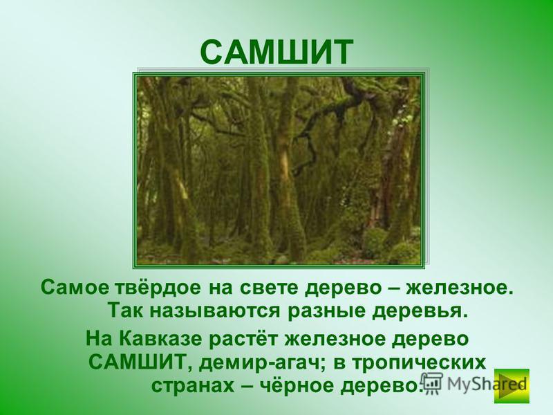 Вспомни название дерева. Его ещё называют дерево- роща! БАНЬЯН ПРОВЕРЬТЕ СЕБЯ