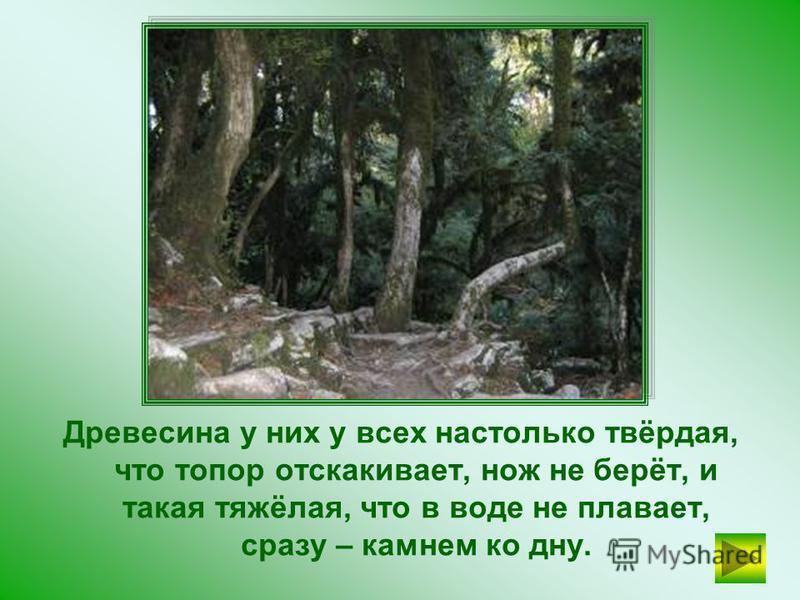 САМШИТ Самое твёрдое на свете дерево – железное. Так называются разные деревья. На Кавказе растёт железное дерево САМШИТ, дамир-агач; в тропических странах – чёрное дерево.