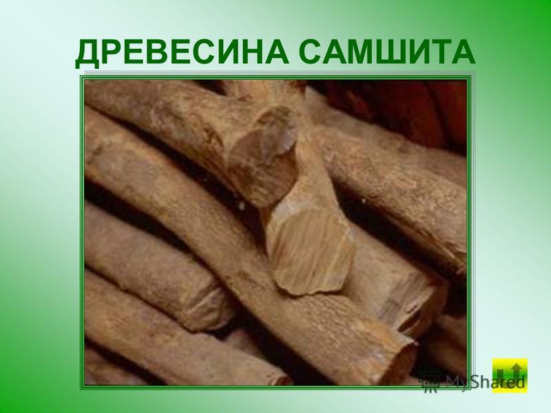 Из некоторых пород железного дерева САМШИТА даже вытачивают детали машин, как из самого настоящего железа.