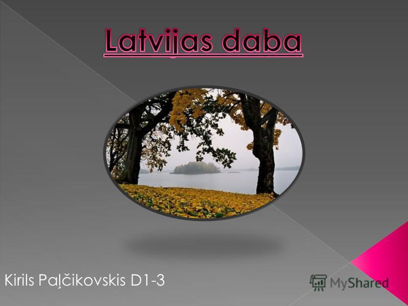 Kirils Paļčikovskis D1-3