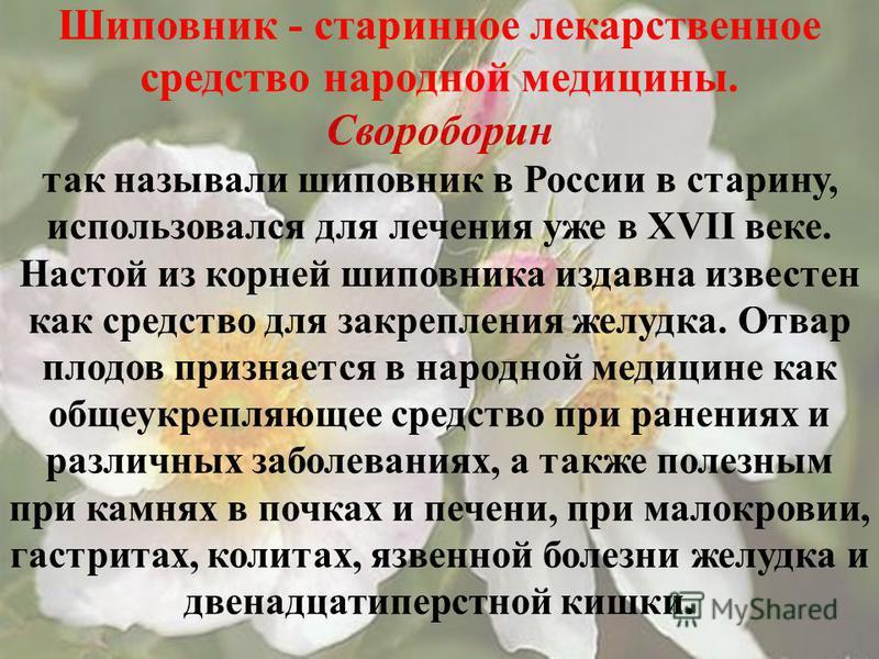 Шиповник - старинное лекарственное средство народной медицины. Свороборин так называли шиповник в России в старину, использовался для лечения уже в XVII веке. Настой из корней шиповника издавна известен как средство для закрепления желудка. Отвар пло