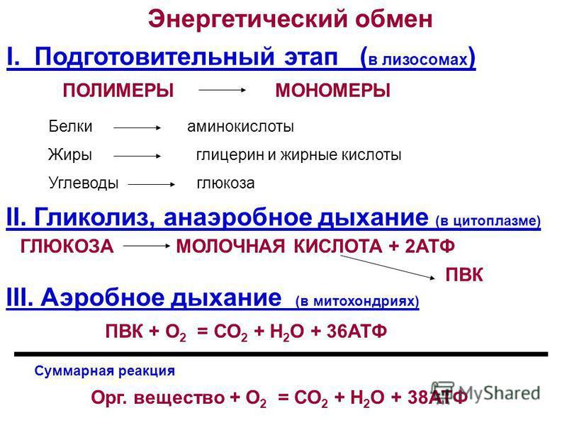 Энергетический обмен I. Подготовительный этап ( в лизосомах ) II. Гликолиз, анаэробное дыхание (в цитоплазме) ПОЛИМЕРЫМОНОМЕРЫ ГЛЮКОЗАМОЛОЧНАЯ КИСЛОТА + 2АТФ III. Аэробное дыхание (в митохондриях) ПВК + О 2 = СО 2 + Н 2 О + 36АТФ Орг. вещество + О 2