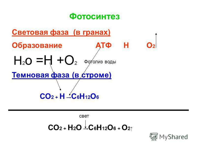 Фотосинтез Световая фаза (в гранах) ОбразованиеАТФН О2О2 Темновая фаза (в строме) СО 2 + Н 2 О С 6 Н 12 О 6 + О 2 СО 2 + Н С 6 Н 12 О 6 свет Н 2 о =Н +О 2 Фотолиз воды