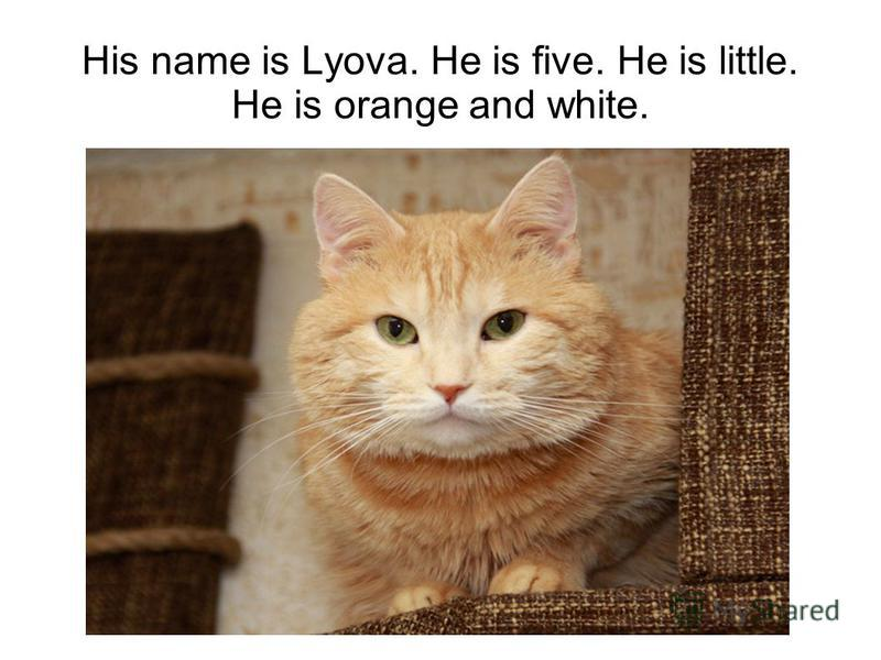 His name is Lyova. He is five. He is little. He is orange and white.