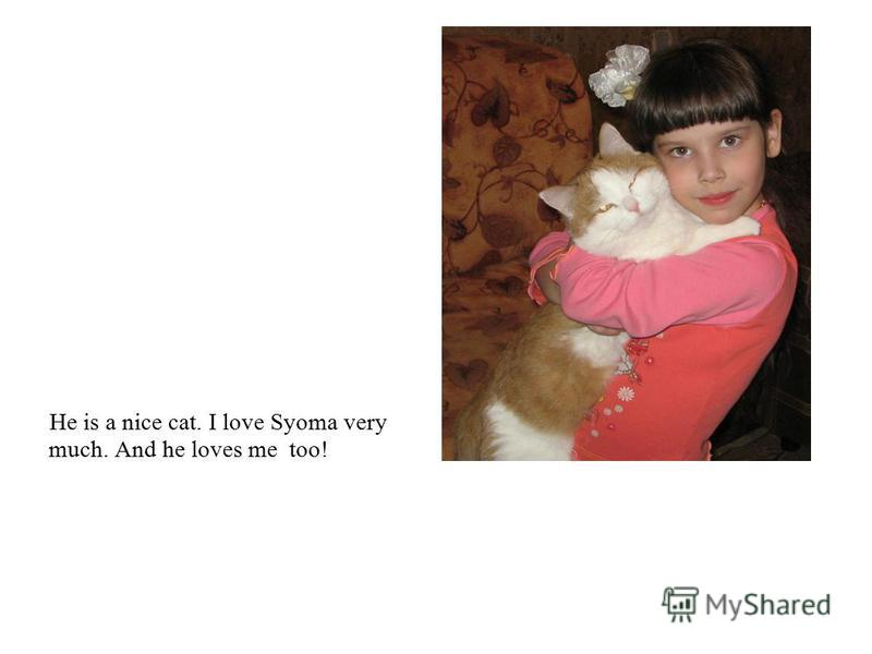 He is a nice cat. I love Syoma very much. And he loves me too!