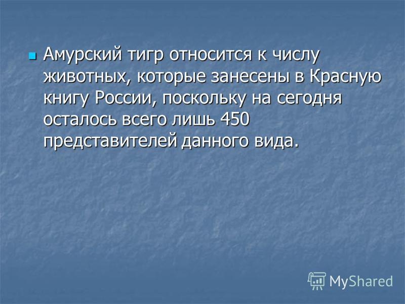 Амурский тигр относится к числу животных, которые занесены в Красную книгу России, поскольку на сегодня осталось всего лишь 450 представителей данного вида. Амурский тигр относится к числу животных, которые занесены в Красную книгу России, поскольку