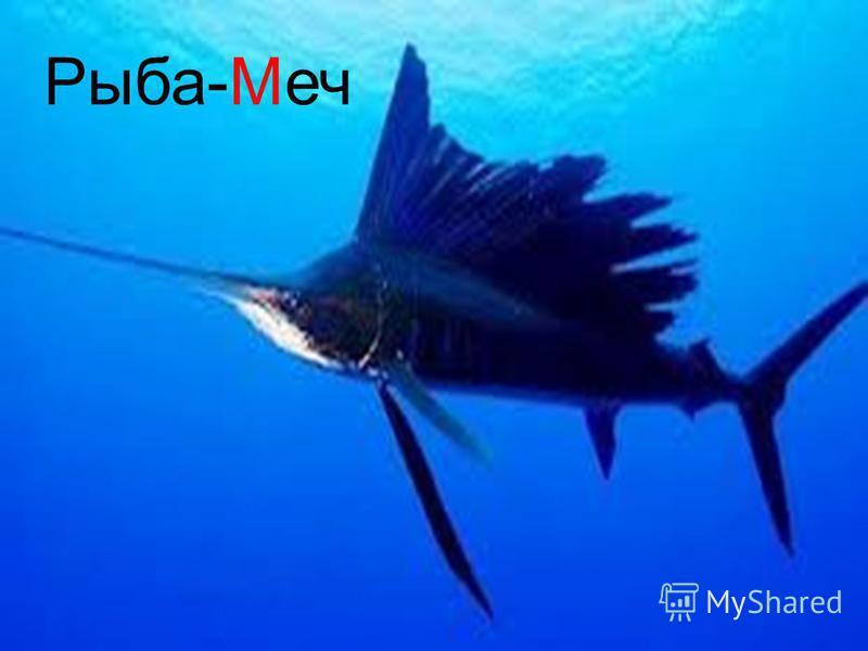 Рыба-Меч