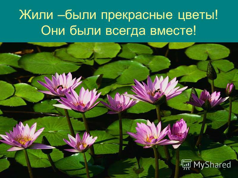 Жили –были прекрасные цветы! Они были всегда вместе!
