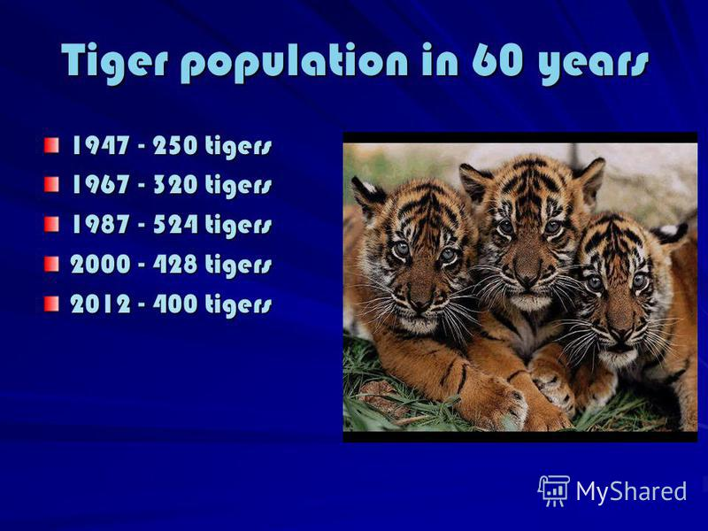 Tiger population in 60 years 1947 - 250 tigers 1967 - 320 tigers 1987 - 524 tigers 2000 - 428 tigers 2012 - 400 tigers