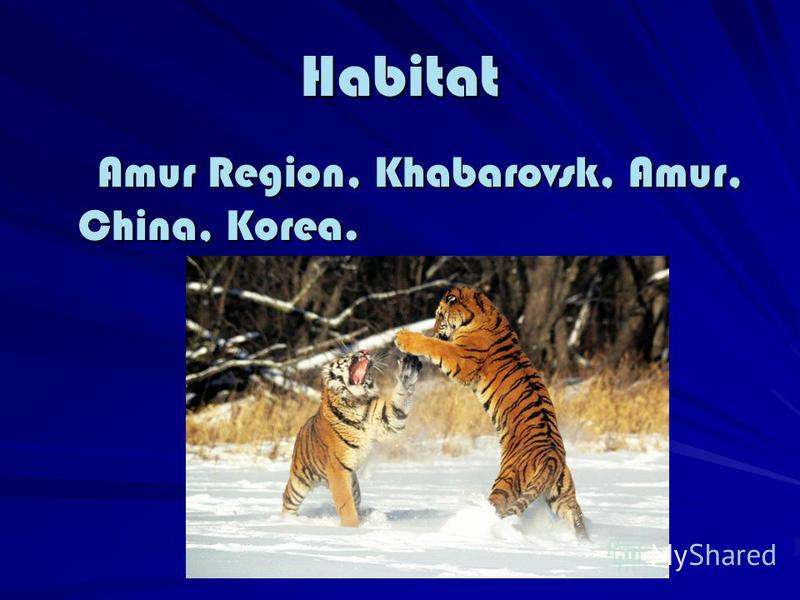 Habitat Amur Region, Khabarovsk, Amur, China, Korea. Amur Region, Khabarovsk, Amur, China, Korea.