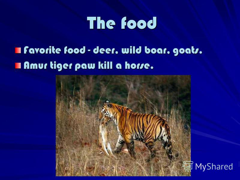 The food The food Favorite food - deer, wild boar, goats. Amur tiger paw kill a horse.