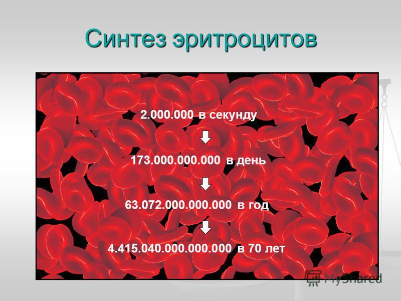 Синтез эритроцитов 2.000.000 в секунду 173.000.000.000 в день 63.072.000.000.000 в год 4.415.040.000.000.000 в 70 лет
