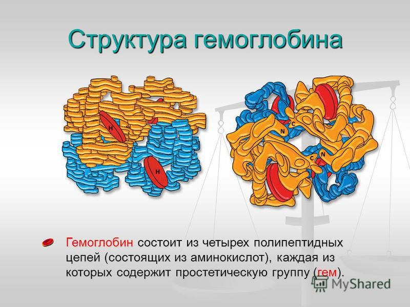 Структура гемоглобина Гемоглобин состоит из четырех полипептидных цепей (состоящих из аминокислот), каждая из которых содержит простетическую группу (гем).
