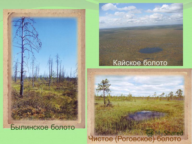 Кайское болото Былинское болото Чистое (Роговское) болото