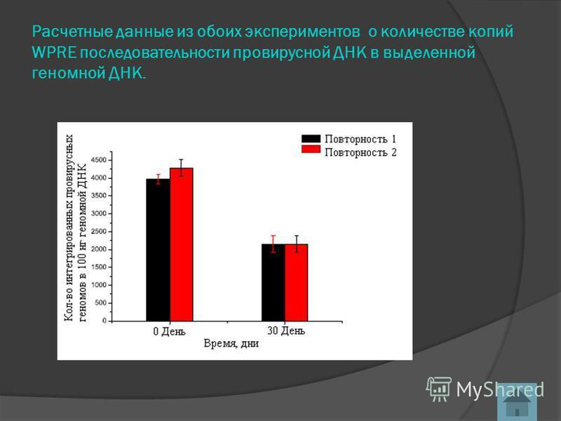 Расчетные данные из обоих экспериментов о количестве копий WPRE последовательности про вирусной ДНК в выделенной геномной ДНК.