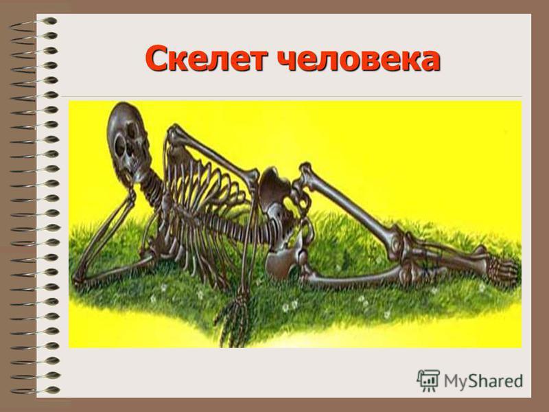 Тема урока: Опора тела и движение а) Скелет человека б) Мышцы в) Осанка человека Учитель начальных классов Киселева Светлана Павловна