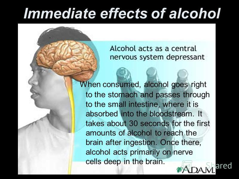 Immediate effects of alcohol When consumed, alcohol goes right to the stomach and passes through to the small intestine, where it is absorbed into the bloodstream. It takes about 30 seconds for the first amounts of alcohol to reach the brain after in