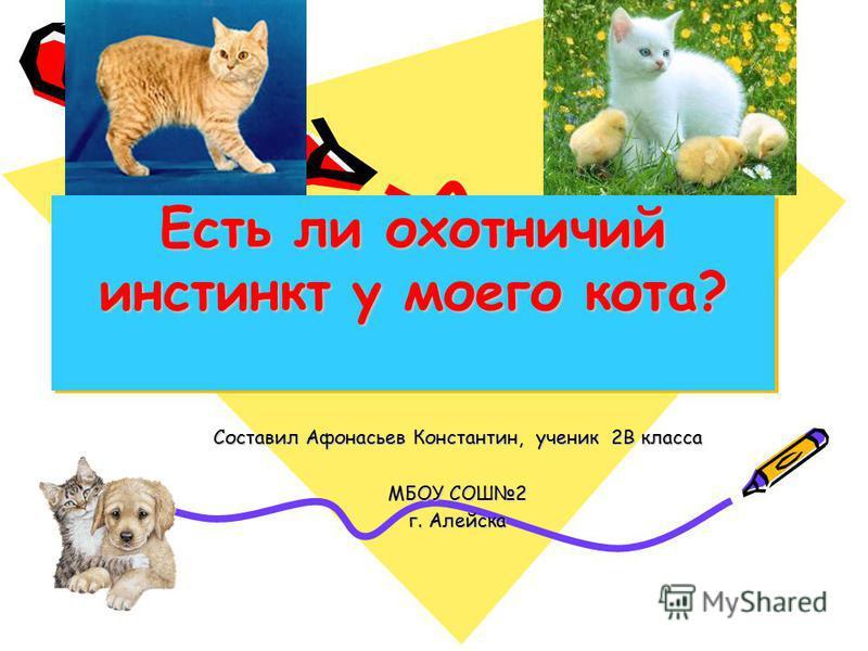 Есть ли охотничий инстинкт у моего кота? Составил Афонасьев Константин, ученик 2В класса МБОУ СОШ2 г. Алейска