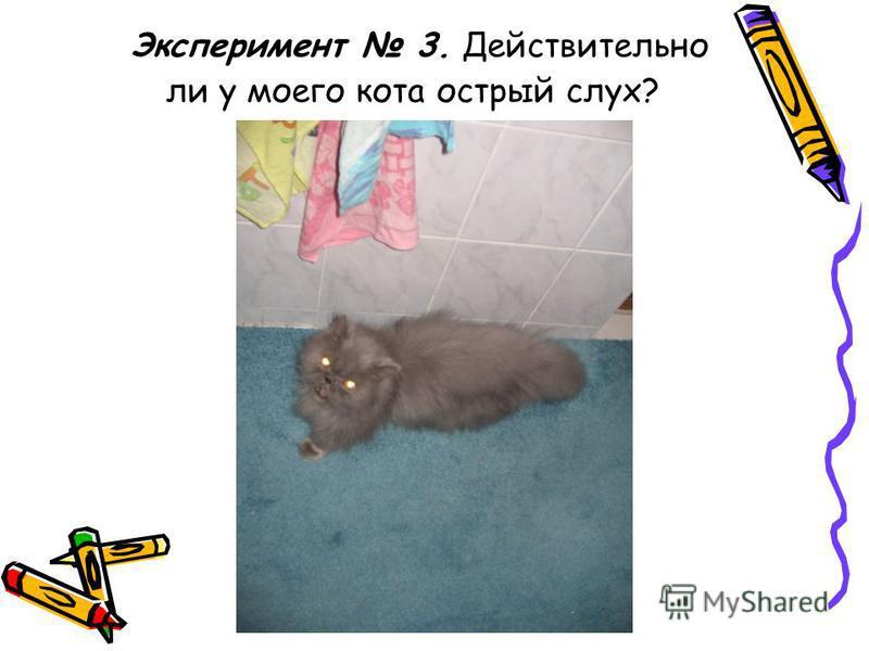 Эксперимент 3. Действительно ли у моего кота острый слух?