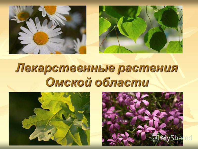 Лекарственные растения Омской области