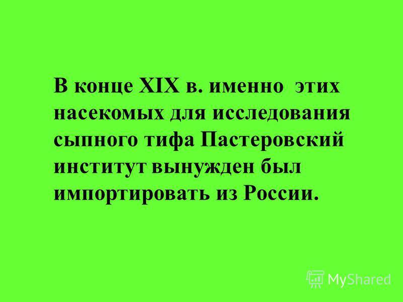 В конце XIX в. именно этих насекомых для исследования сыпного тифа Пастеровский институт вынужден был импортировать из России.