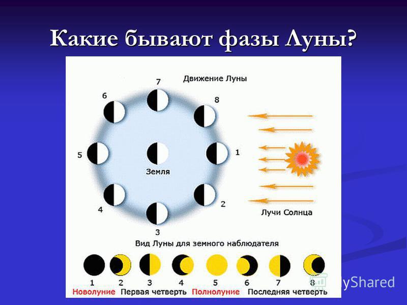 Какие бывают фазы Луны?