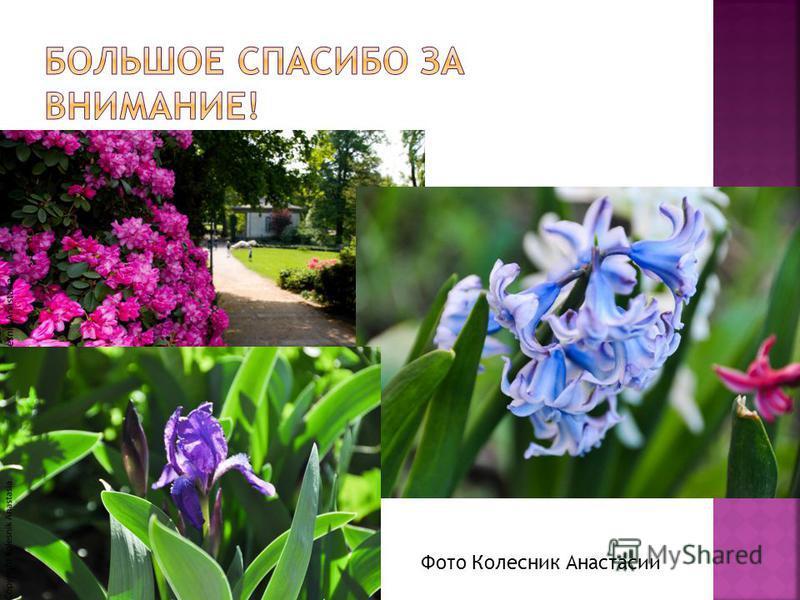 Фото Колесник Анастасии