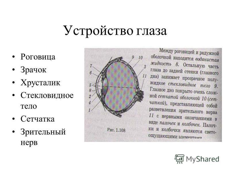 Устройство глаза Роговица Зрачок Хрусталик Стекловидное тело Сетчатка Зрительный нерв