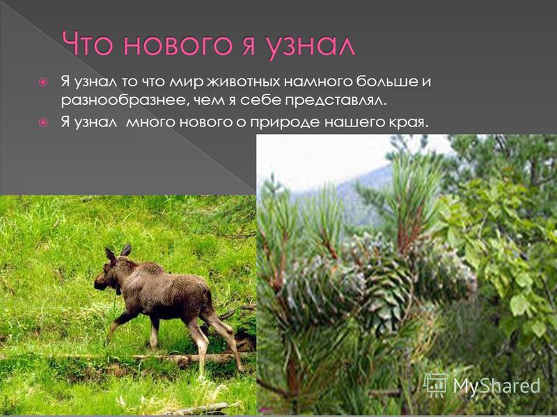 Я узнал то что мир животных намного больше и разнообразнее, чем я себе представлял. Я узнал много нового о природе нашего края.