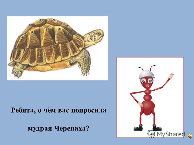 Ребята, о чём вас попросила мудрая Черепаха?