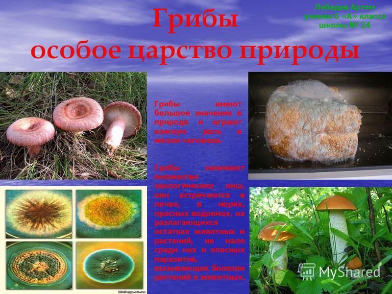 Грибы особое царство природы Грибы имеют большое значение в природе и играют важную роль в жизни человека. Грибы занимают множество экологических ниш, они встречаются в почве, в морях, пресных водоемах, на разлагающихся остатках животных и растений,