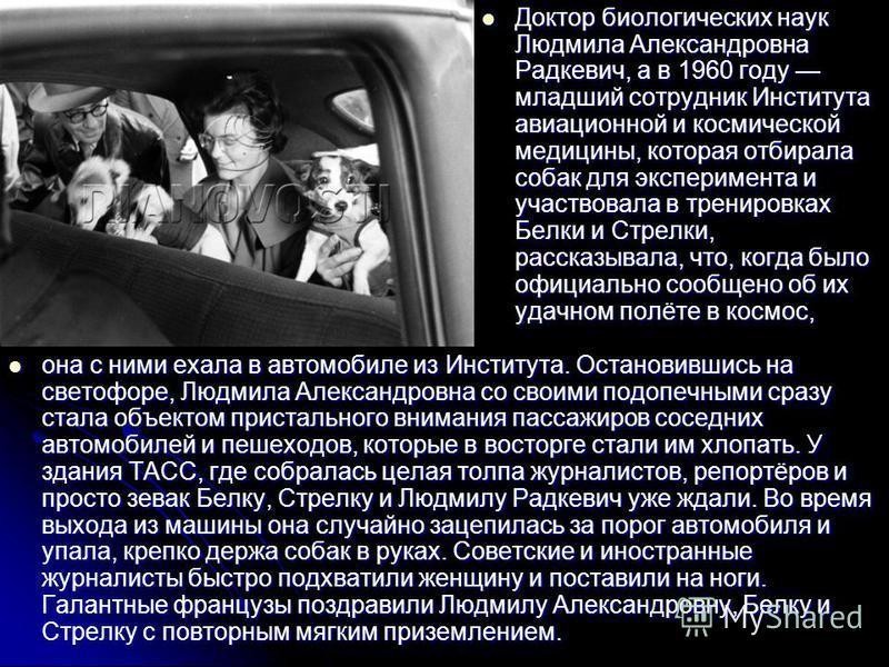 Доктор биологических наук Людмила Александровна Радкевич, а в 1960 году младший сотрудник Института авиационной и космической медицины, которая отбирала собак для эксперимента и участвовала в тренировках Белки и Стрелки, рассказывала, что, когда было