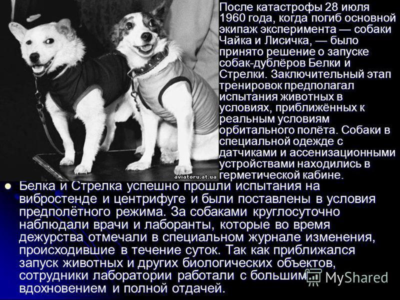 После катастрофы 28 июля 1960 года, когда погиб основной экипаж эксперимента собаки Чайка и Лисичка, было принято решение о запуске собак-дублёров Белки и Стрелки. Заключительный этап тренировок предполагал испытания животных в условиях, приближённых